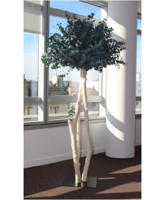 Les Arbustes stabilisés